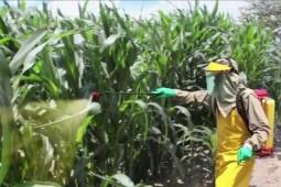 Resolución sobre límite máximo de residuos de plaguicidas en alimentos