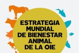 Comentarios a nuevo borrador sobre bienestar animal en ponedoras
